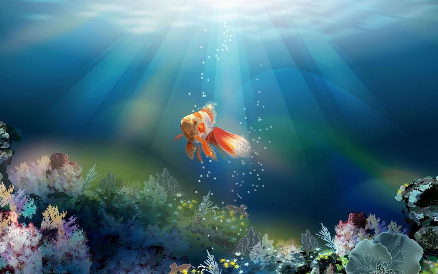Goldfish Wallpapers PC