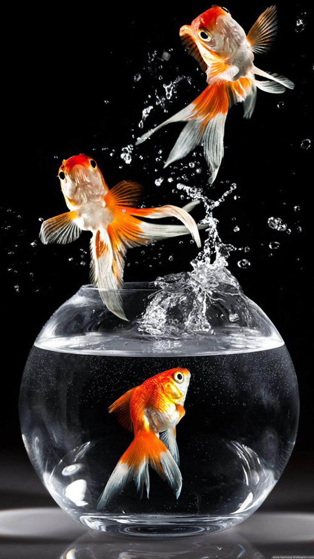 46+ Best & Inspirational High Quality Goldfish Backgrounds