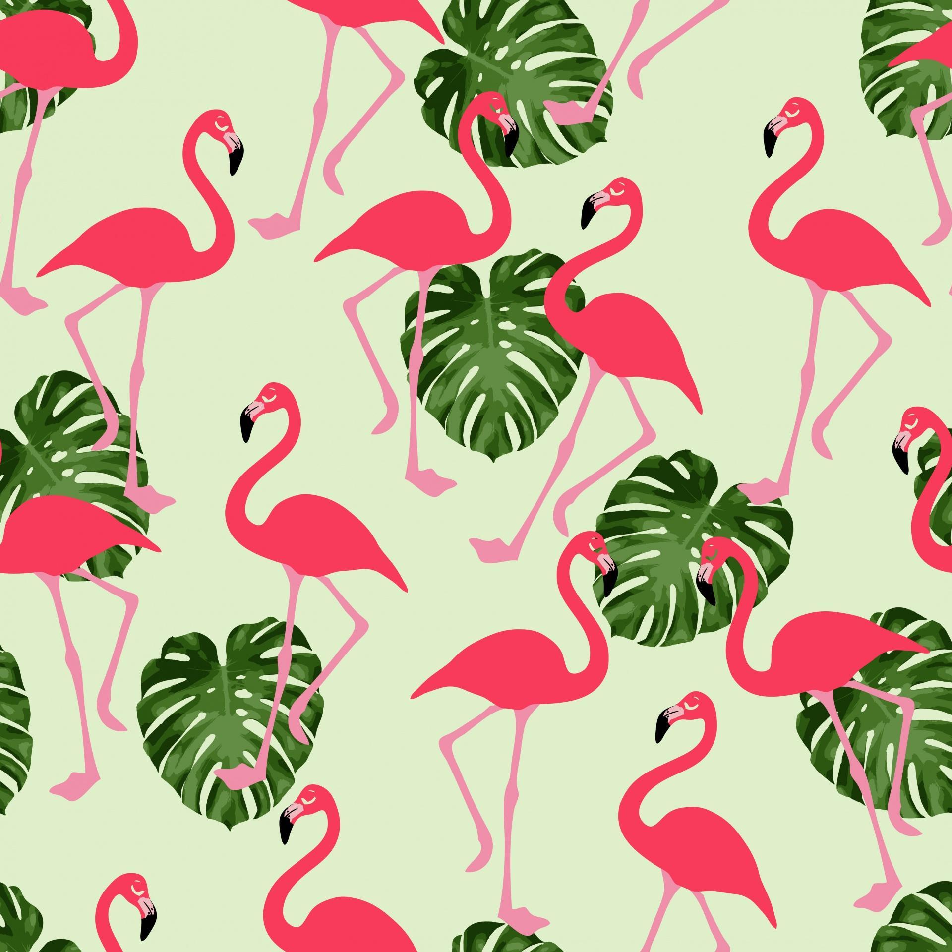 Flamingo Wallpaper Image Group 47