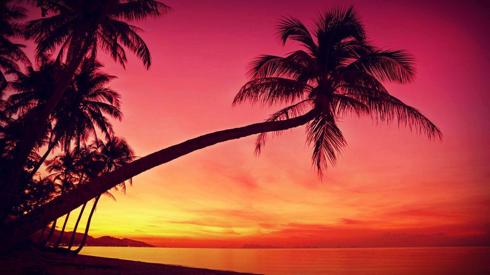 HD Tropical, Sunset, Palm Trees, Silhouette, Beach Wallpapers