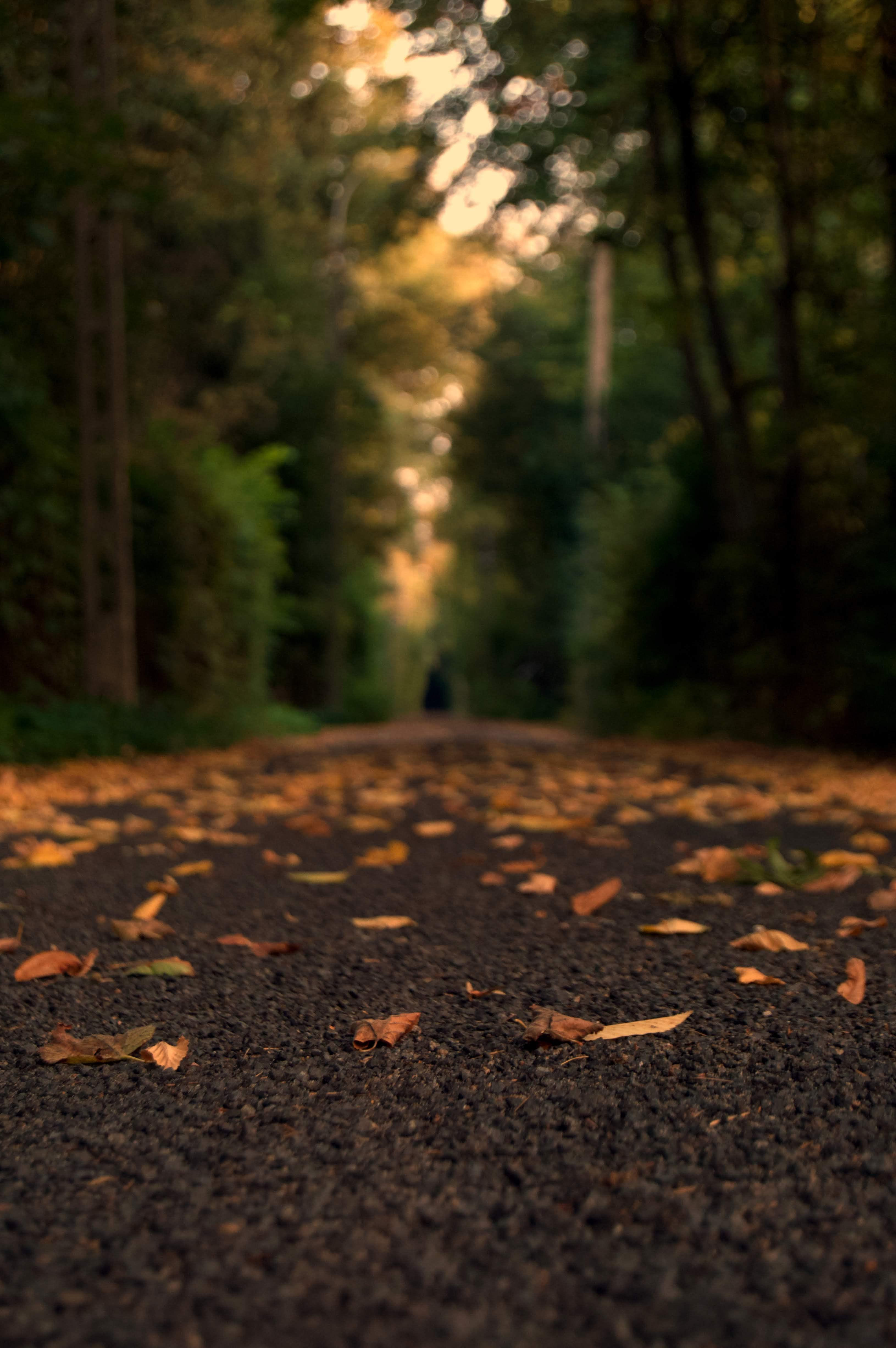 Photography Blur Road Nature Background Hd