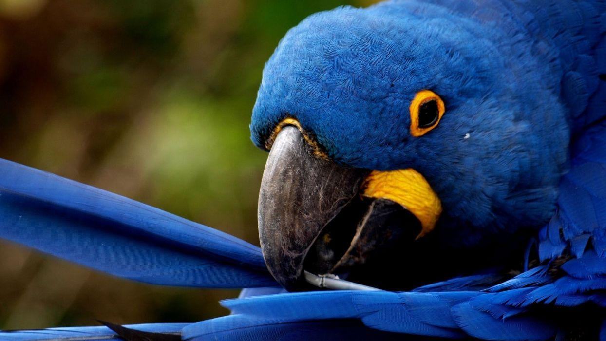 Macaw Wallpapers 1244x700 px,