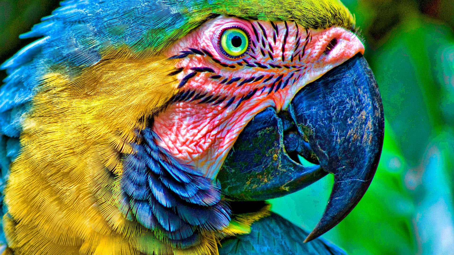 Macaw wallpapers 1920x1080 Full HD