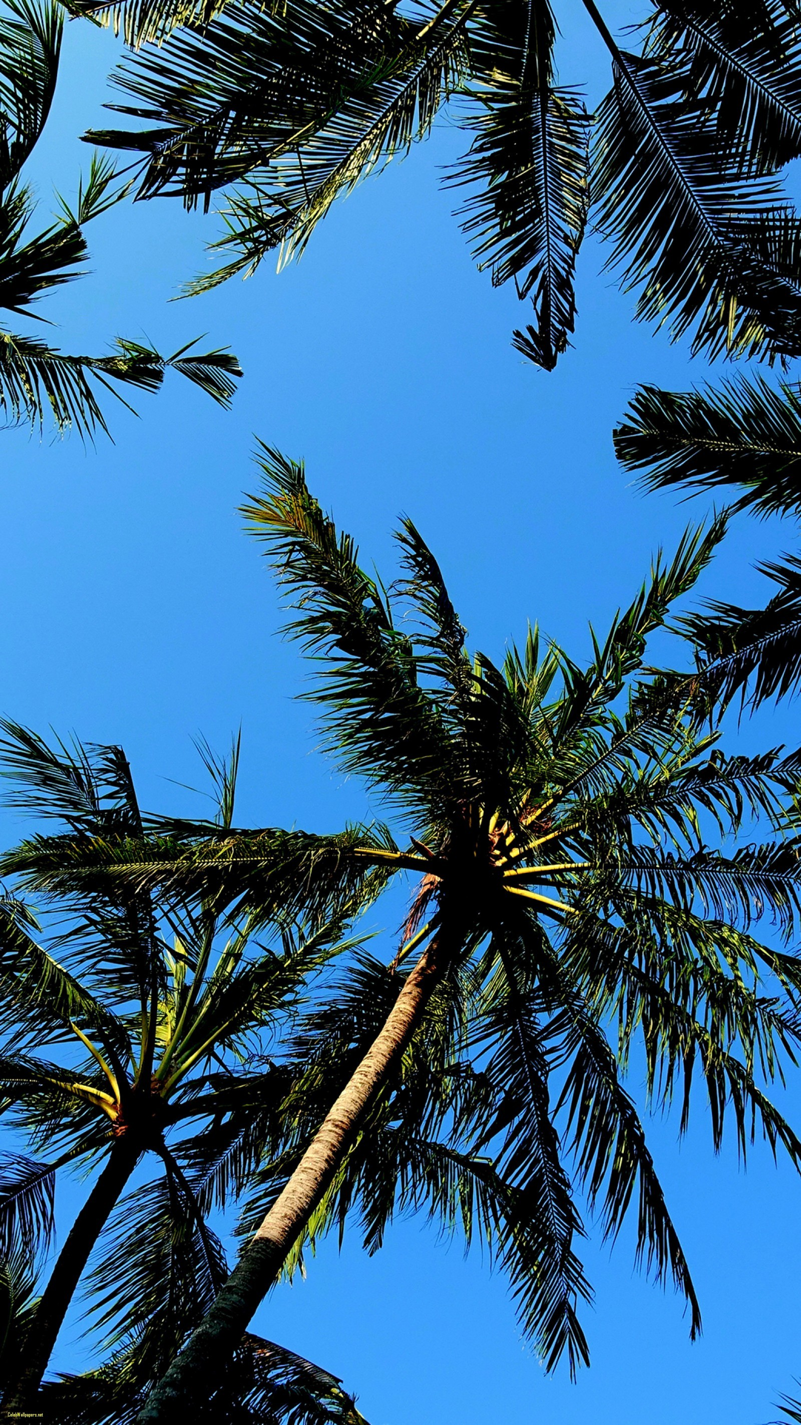 60+ Palm Tree Wallpapers