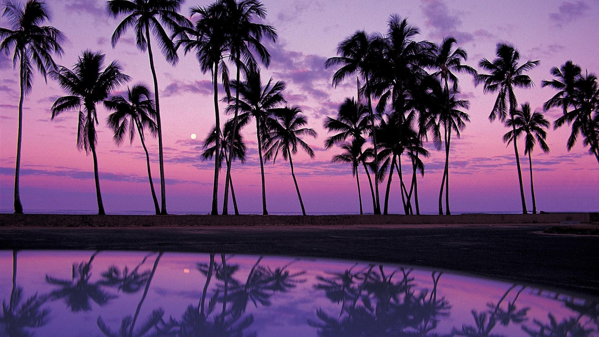 Palm Tree Wallpapers 5
