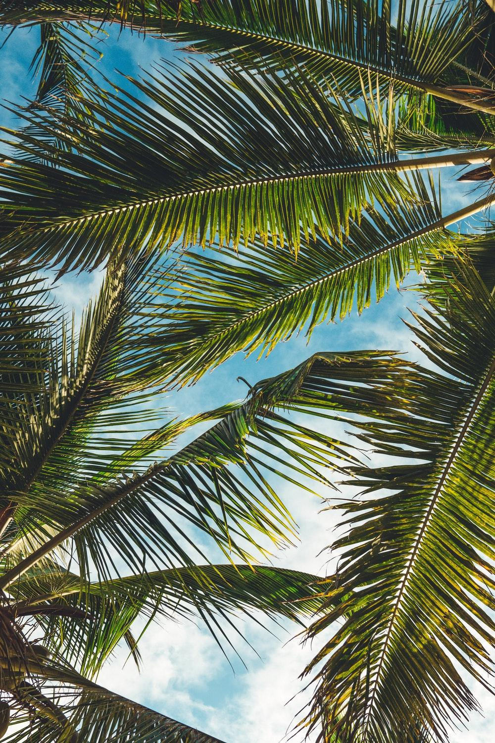 Tree, leaf, plant and palm tree HD photo by Peter Fogden