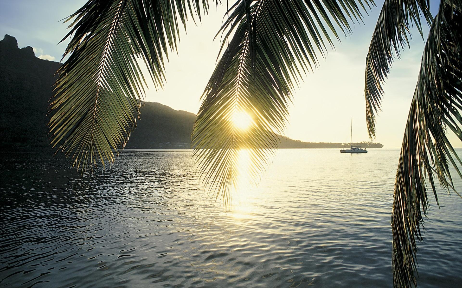 Palm Tree wallpapers ·① Download free HD wallpapers for desktop and