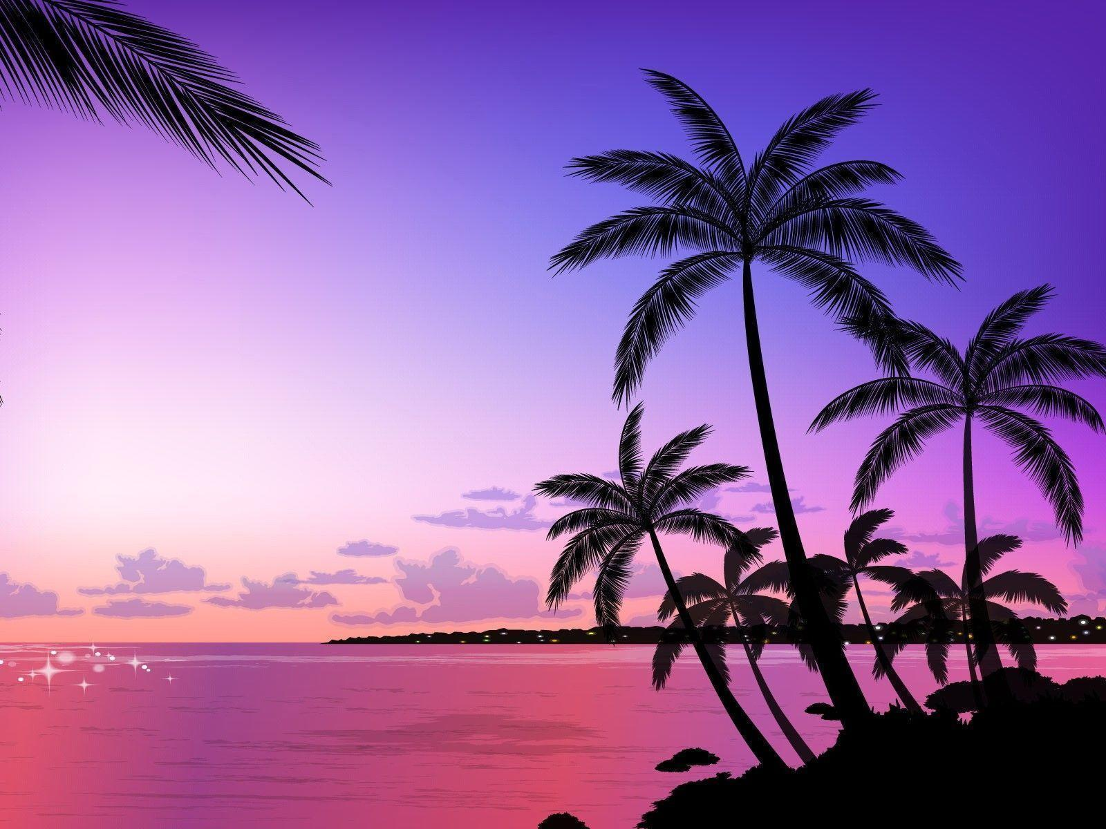 9193 tropical palm tree wallpapers