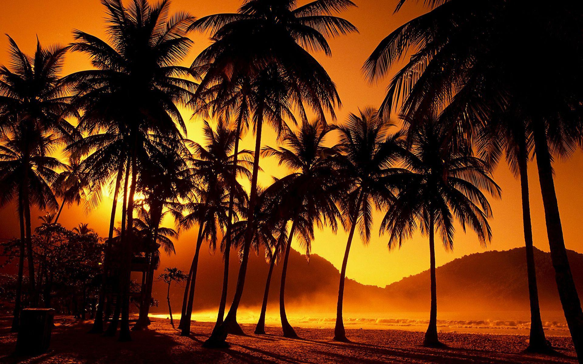 Palm Trees Wallpapers