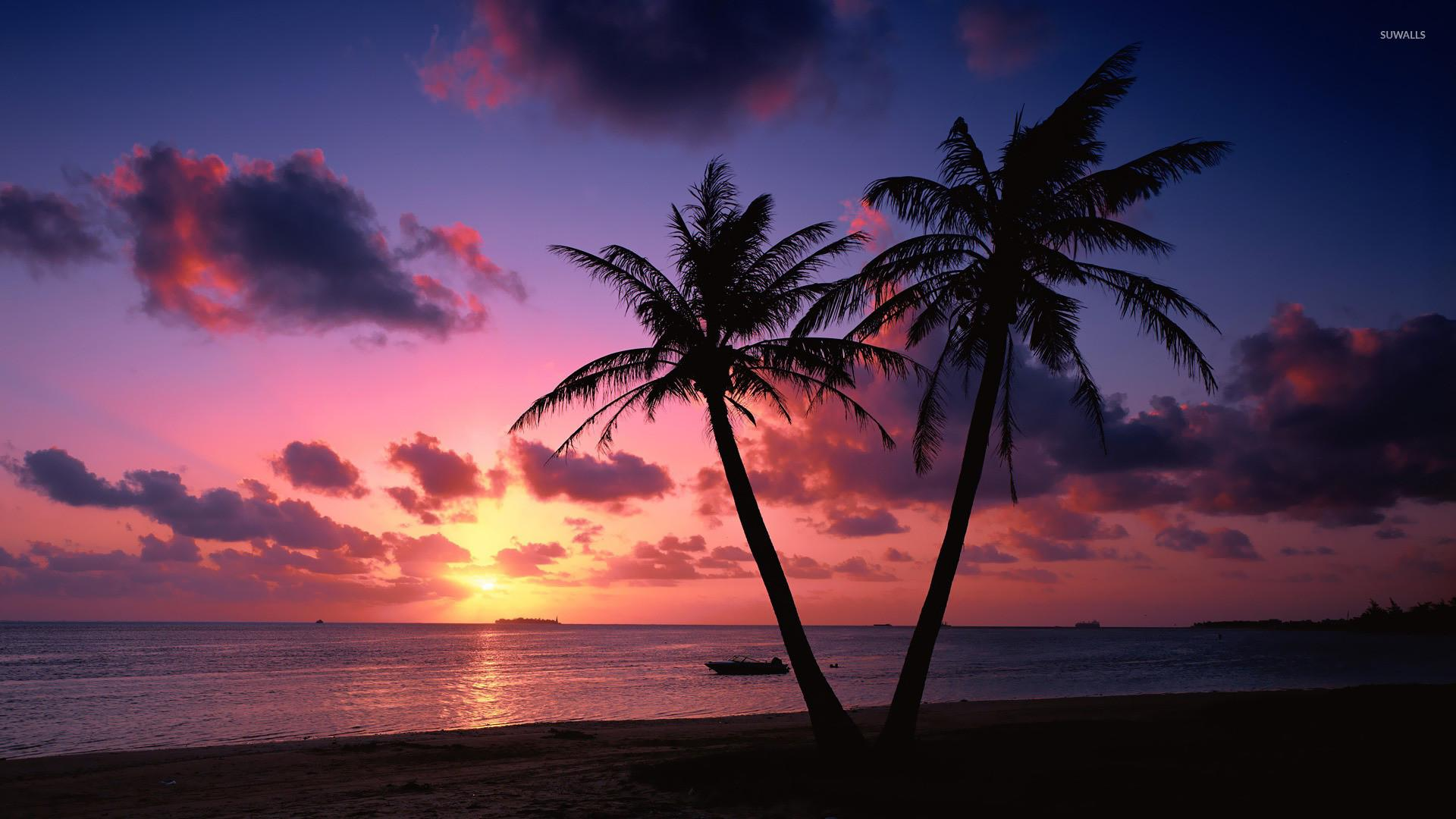 Sunset Palm Trees Wallpapers