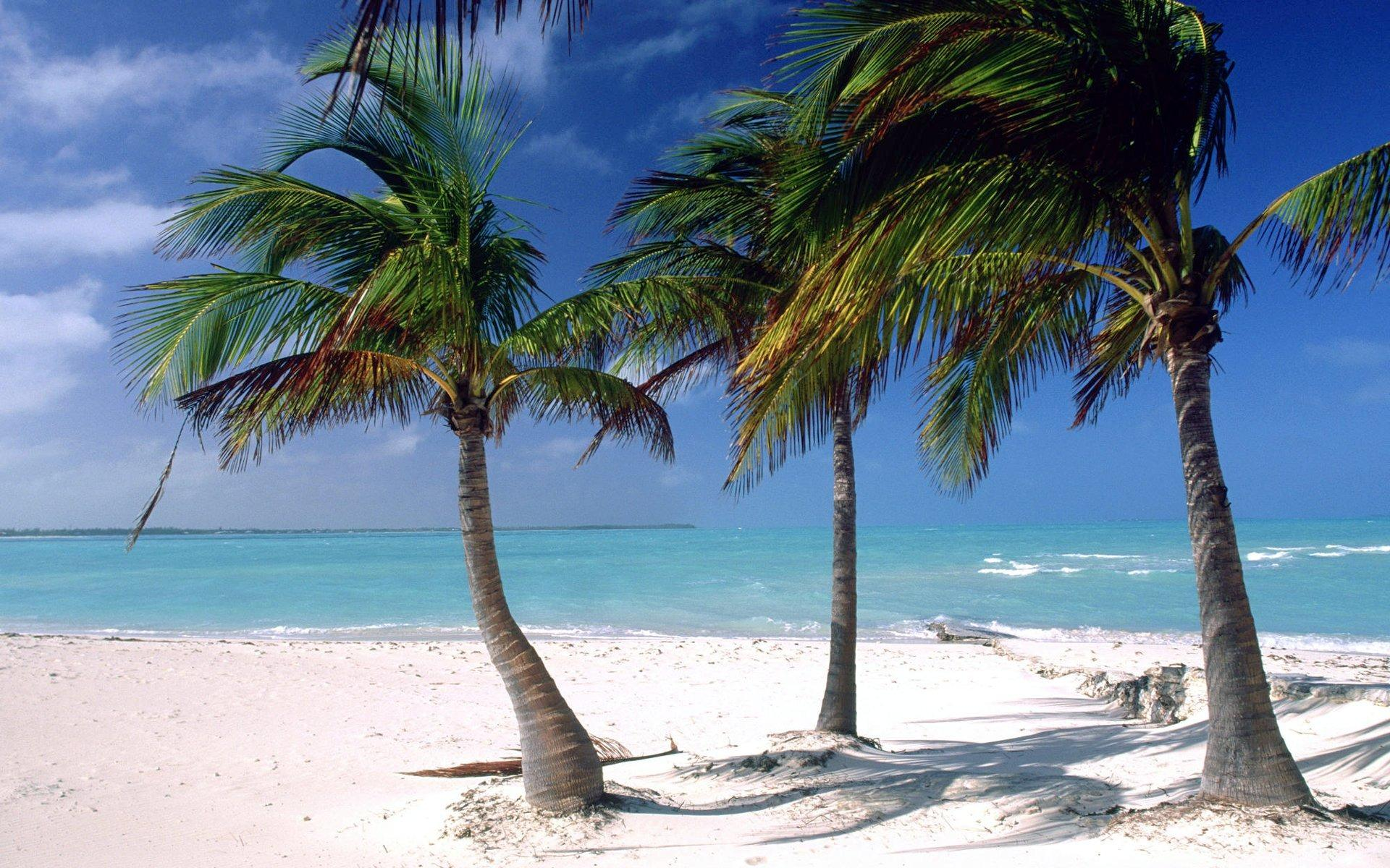 Beach Palm Tree Wallpapers