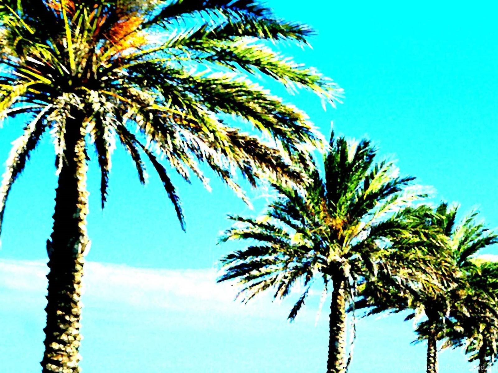 Palm Trees Wallpapers 1600x1200px Desktop Backgrounds