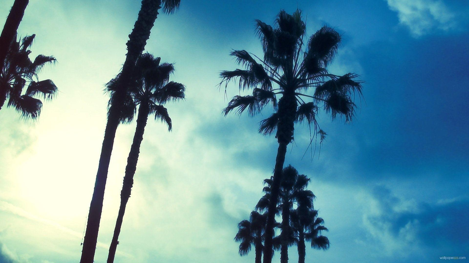 Palm Tree iPhone Wallpapers