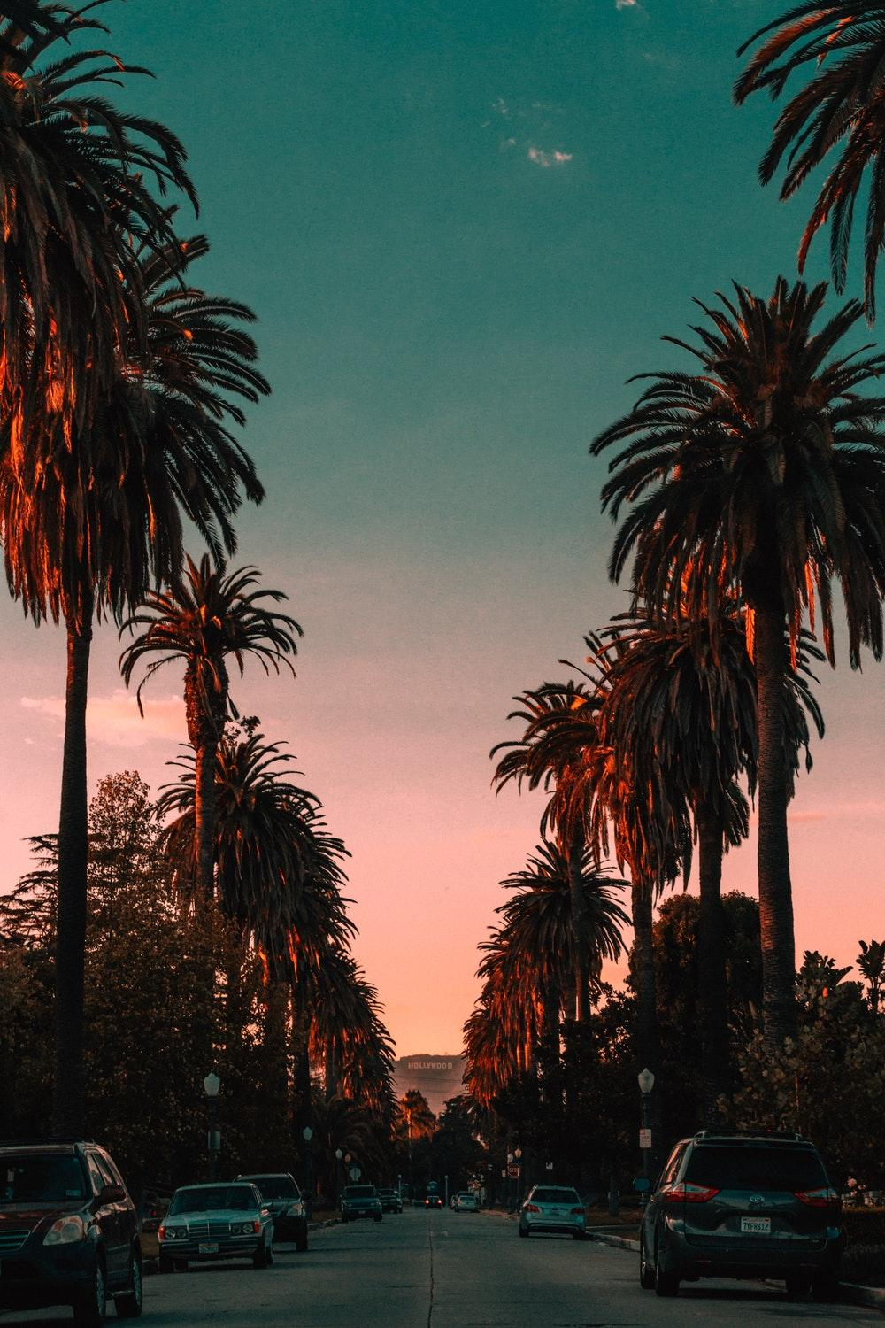 Palm Trees Wallpapers – Scalsys