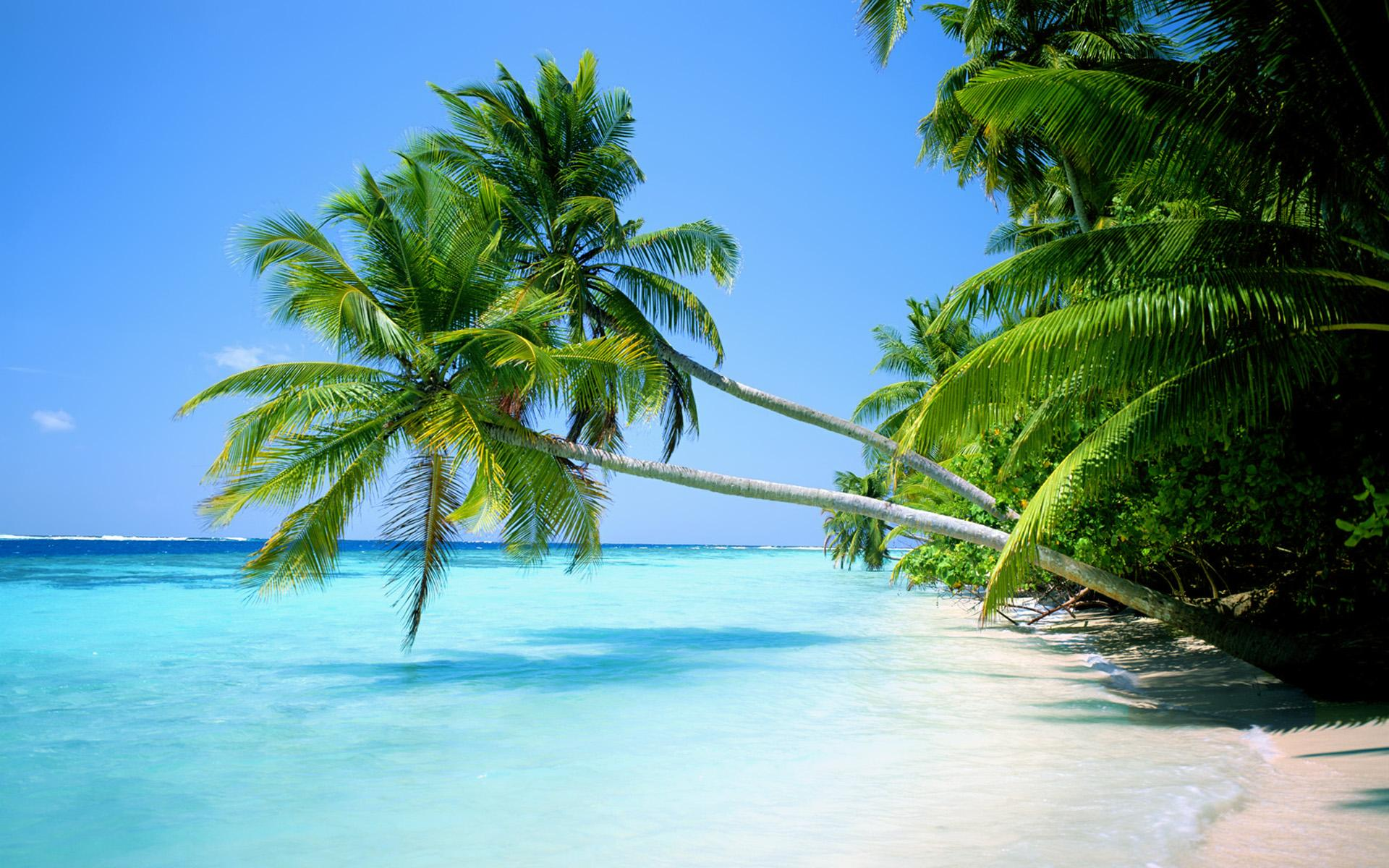 Palm Tree Beach Wallpapers 2560x1600