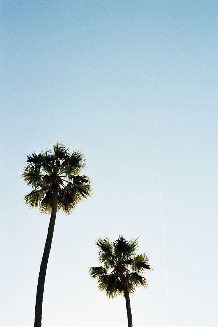 palm trees. www.withlovefromkat