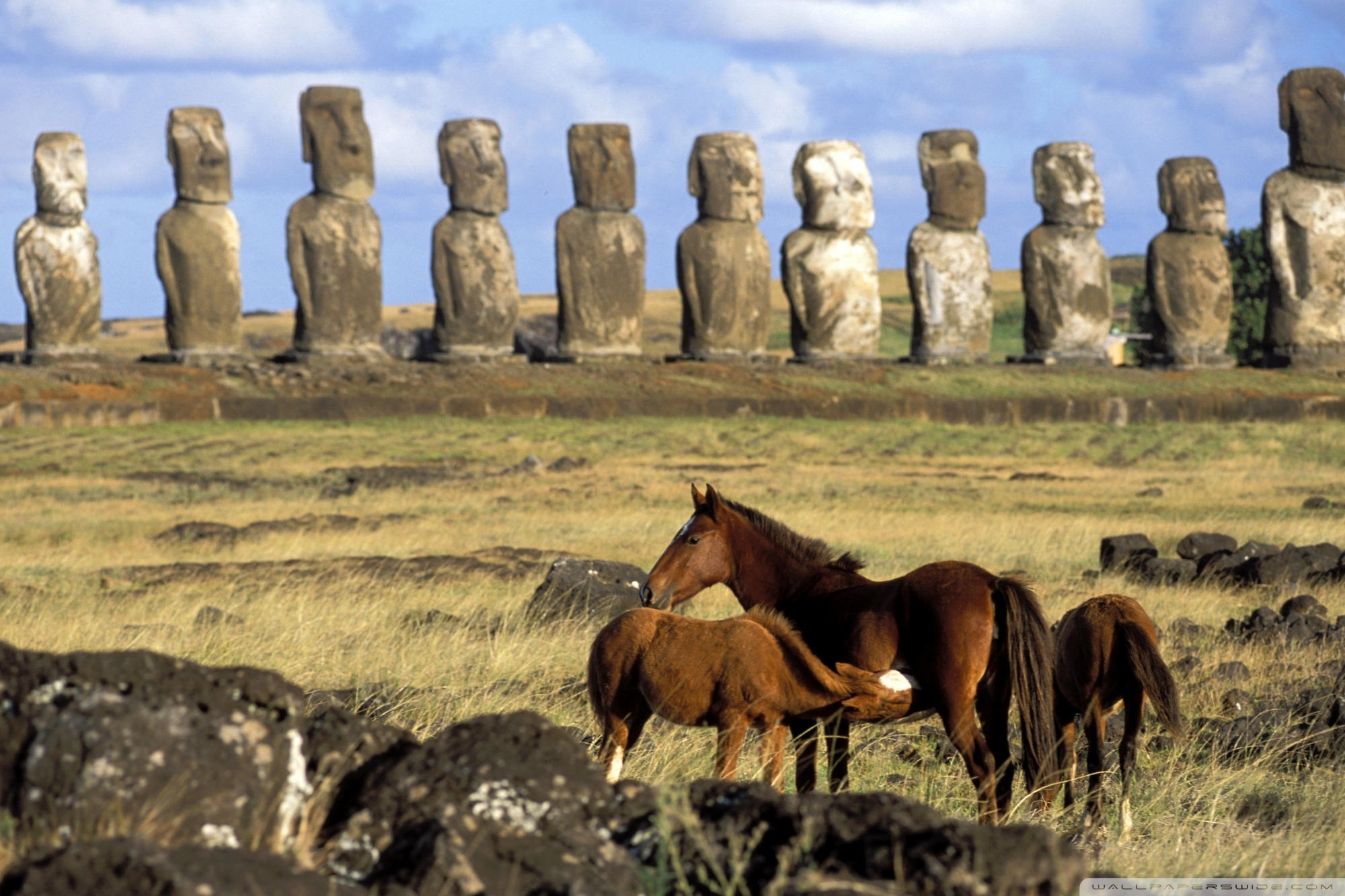 Download Great Horses Of Easter Island Chile Wallpapers