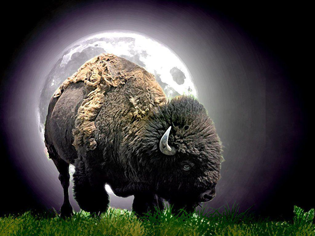 Native American Buffalo Wallpapers