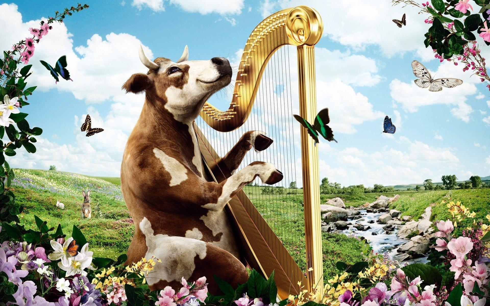 harp cow nature HD wallpapers