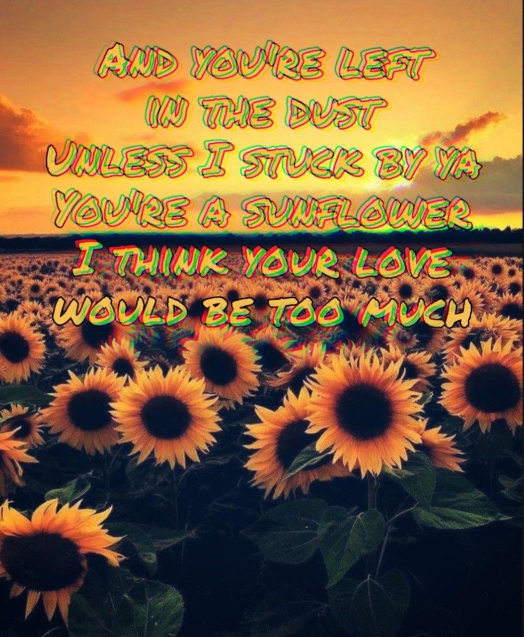 Post Malone Lyrics: Sunflower Post Malone Wallpapers