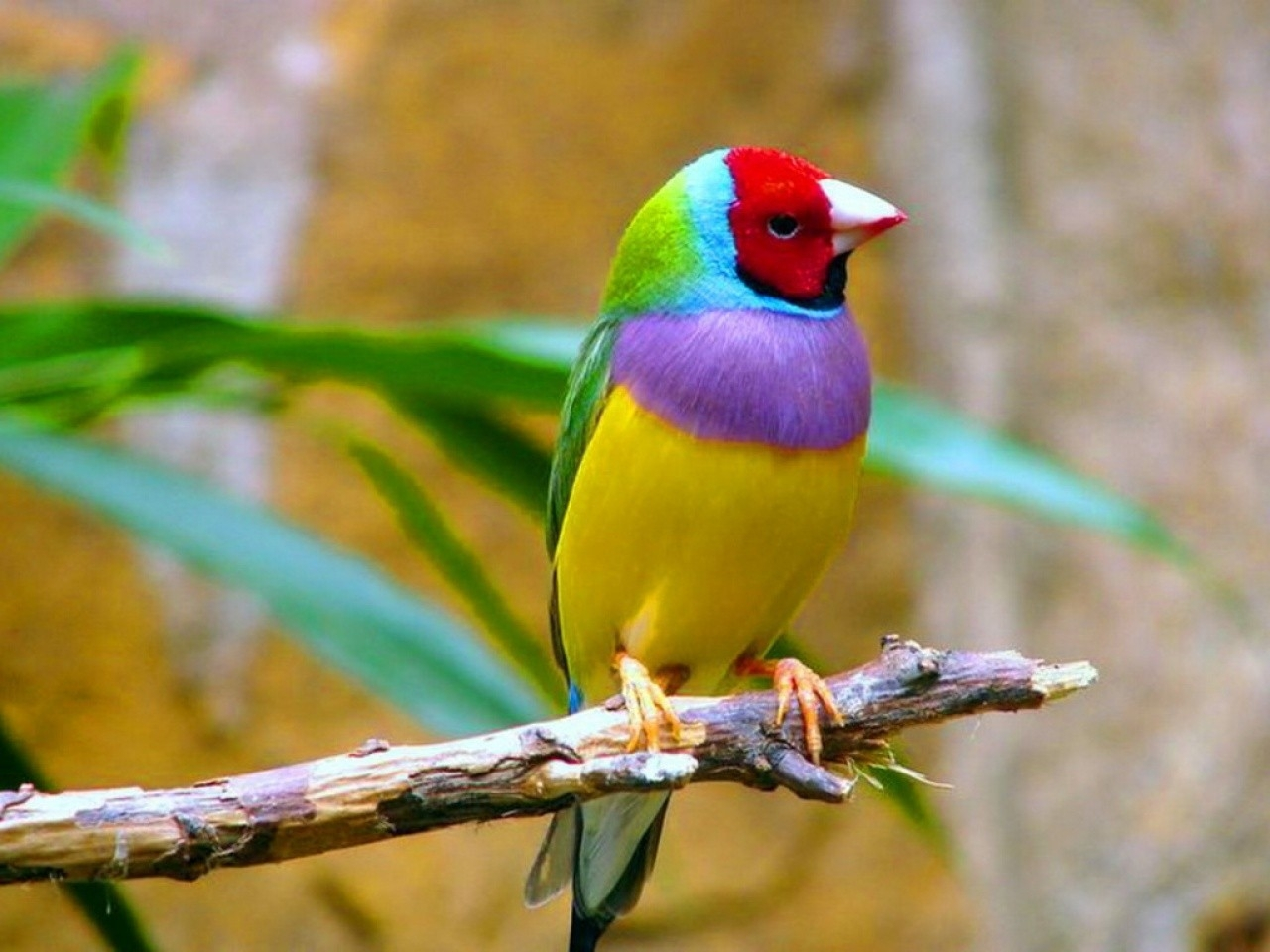 Tropical Birds Wallpapers Wallpaper Cave