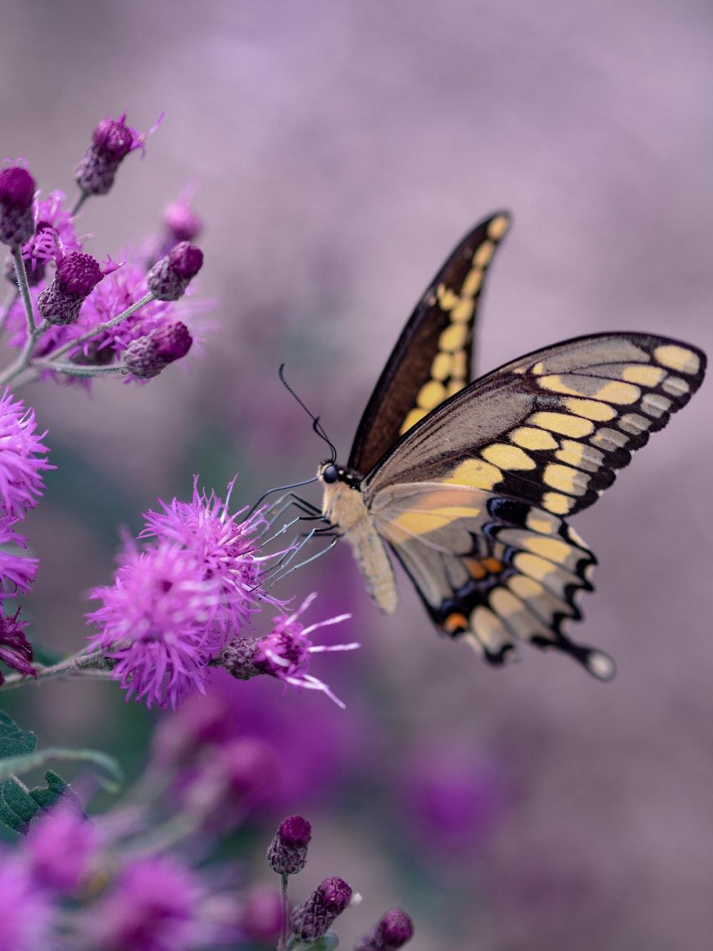 Butterfly Flying Wallpapers Wallpaper Cave