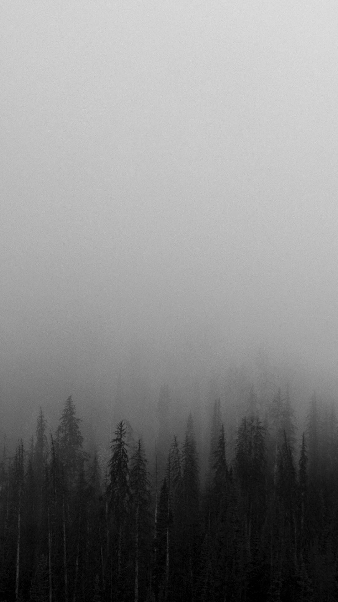 Black-and-White-Mist-Forests-Wallpaper | iPhone Wallpapers in 2019 ...