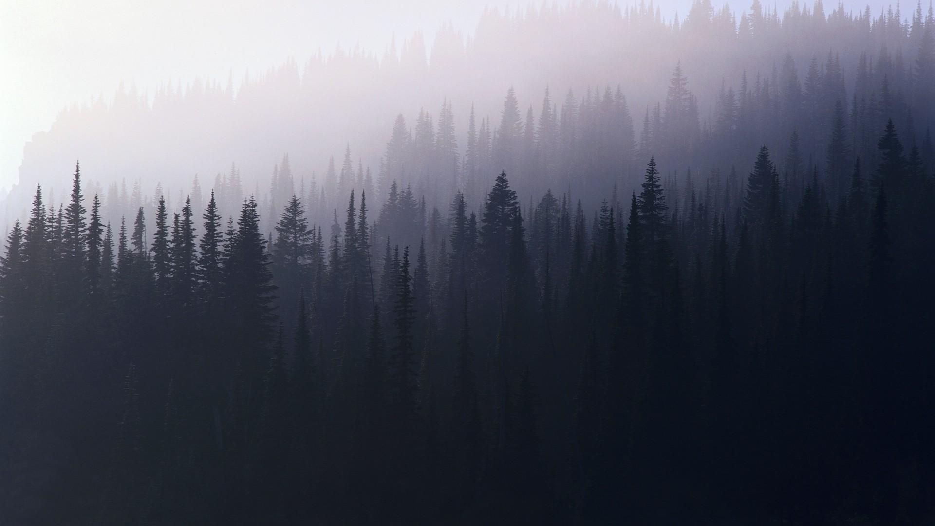 forest, mist :: Wallpapers