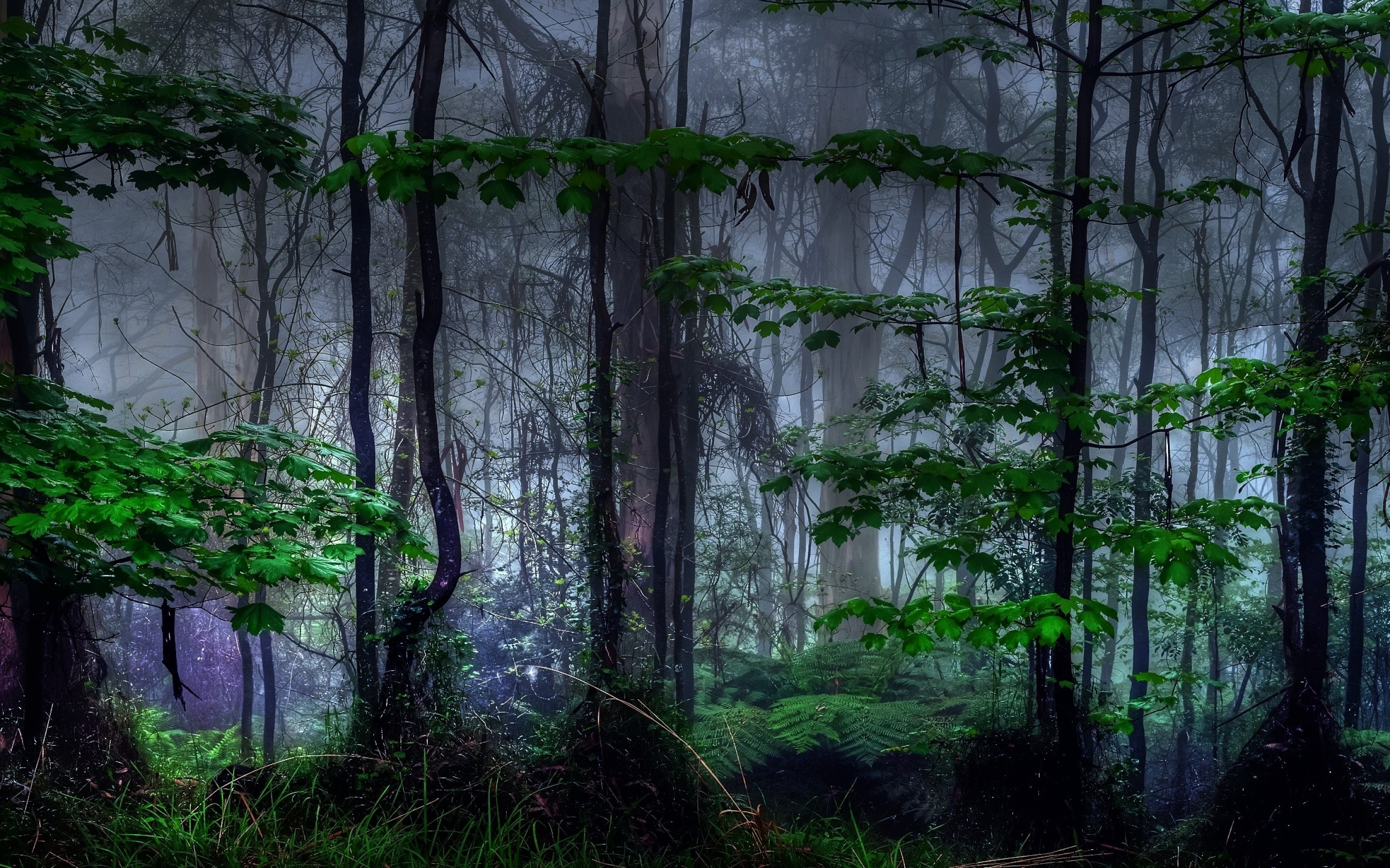 Download 2880x1800 Forest, Dark, Trees, Foliage, Mist Wallpapers for ...