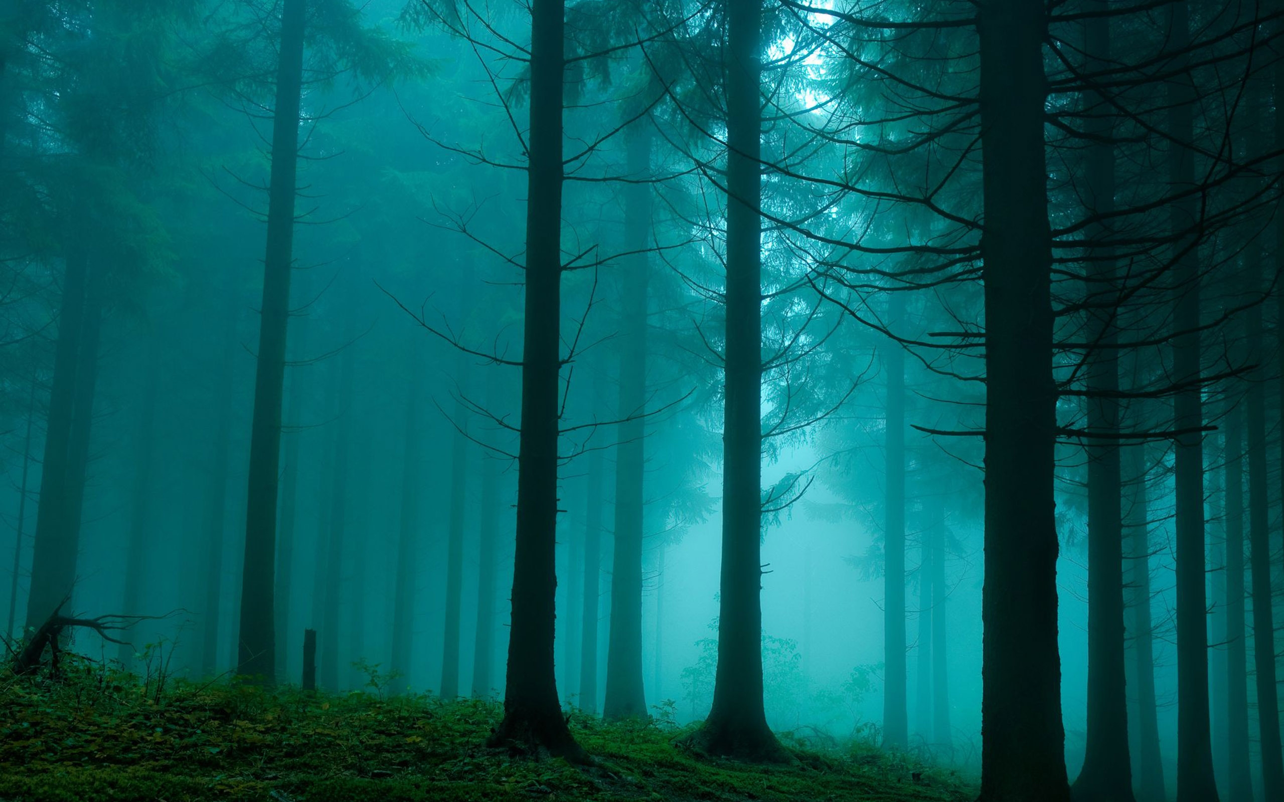 Forest In The Mist Nature Mac Wallpaper Download | Free Mac ...
