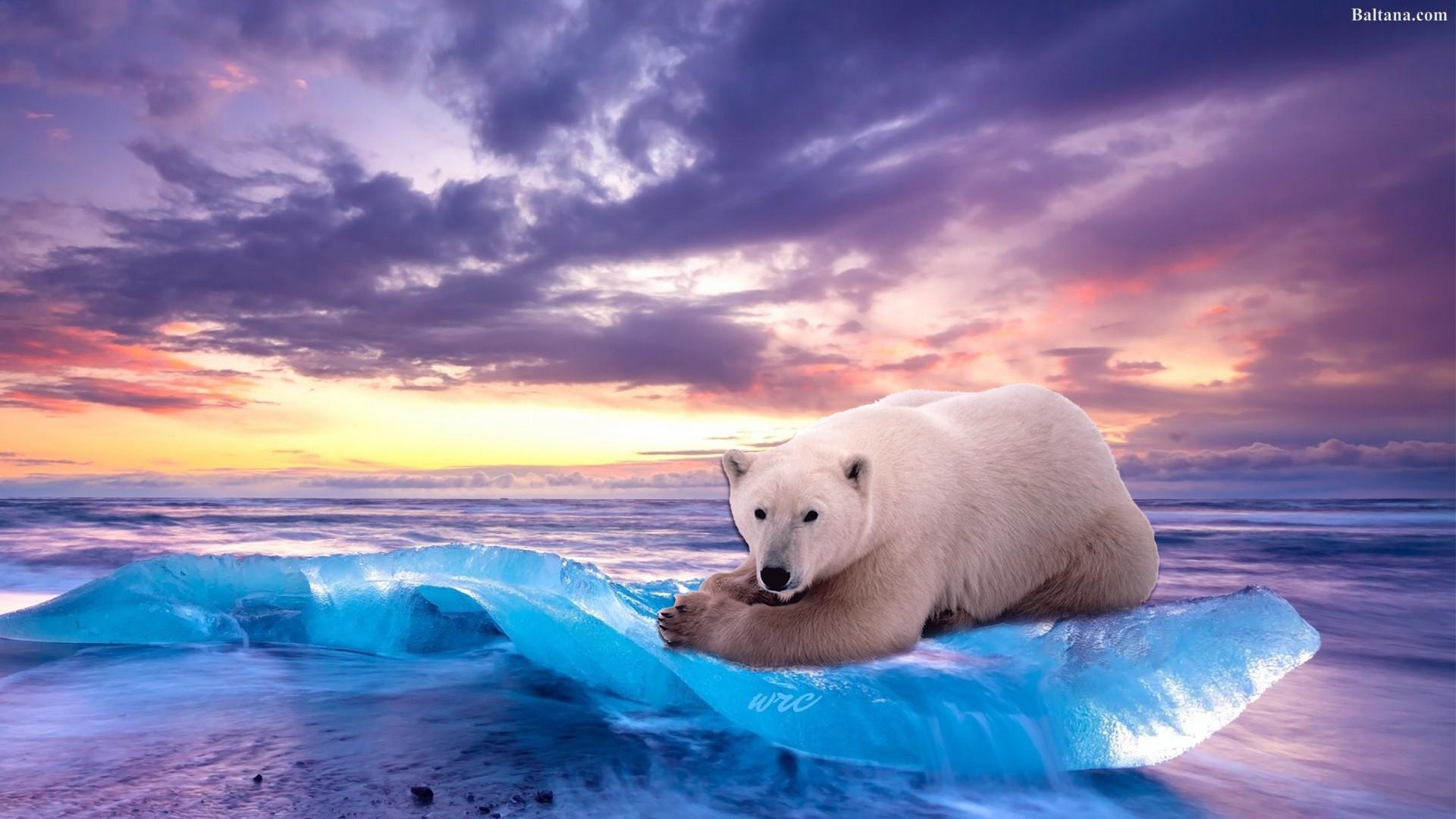 Ice Bear Wallpapers - Wallpaper Cave