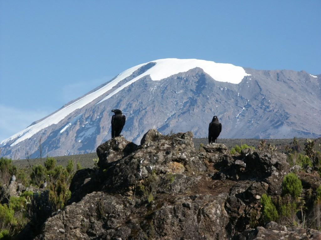 The snows of Kilimanjaro, and why seeing is believing – Mark Horrell