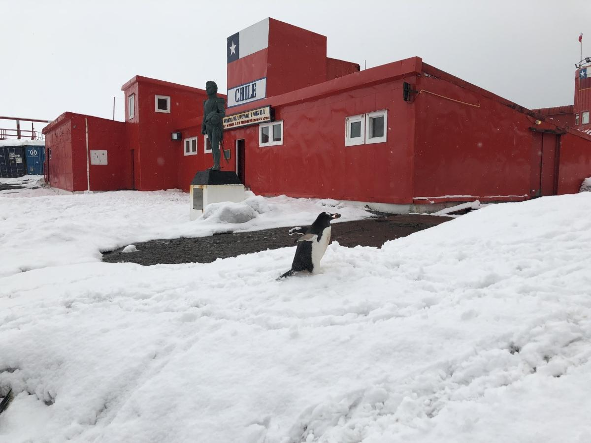 Chinese Exploitation of Natural Resources in Antarctica is Worrying ...