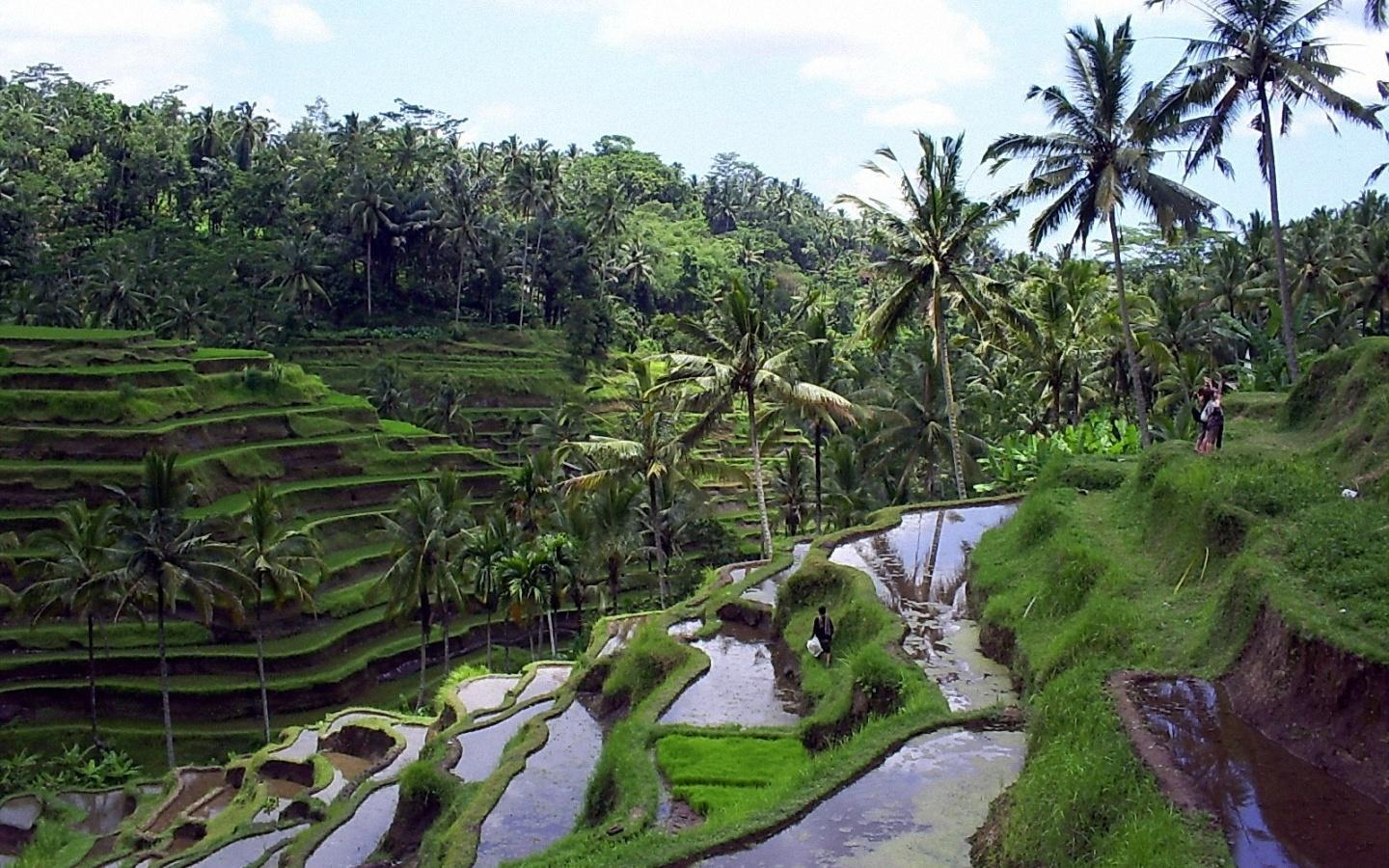 Bali Package 5 Days / 4 Nights