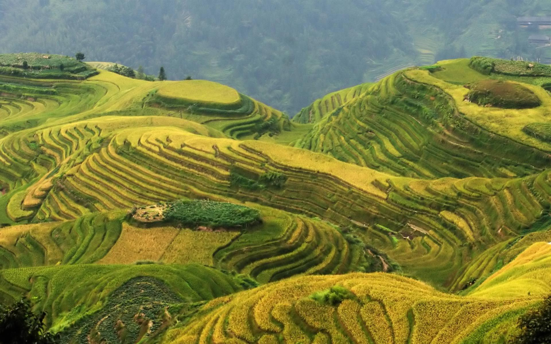 Rice Terrace Wallpapers and Background Images - stmed.net