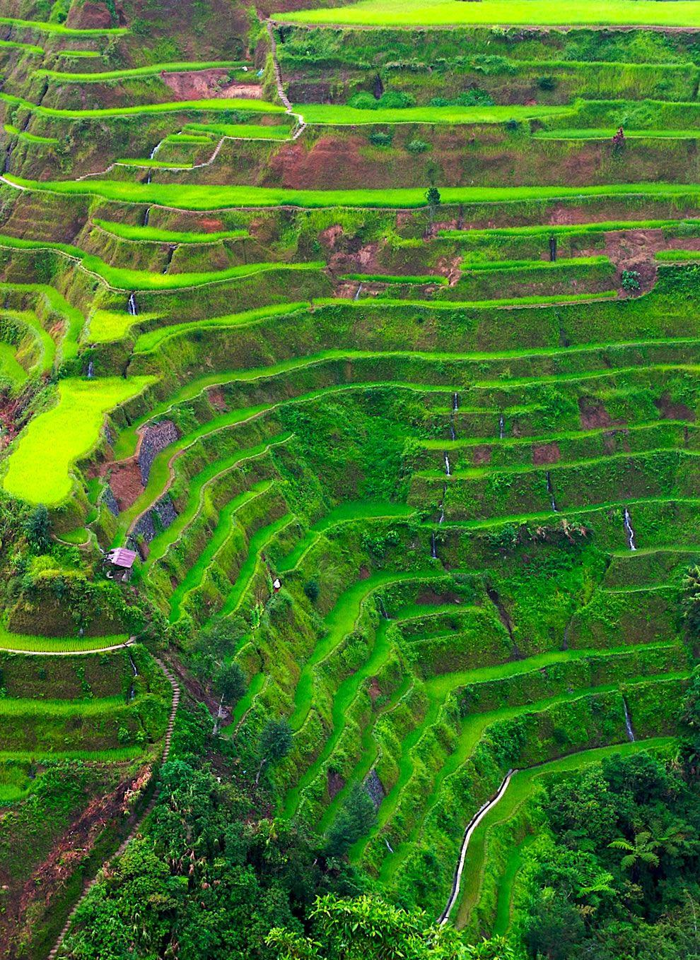 The rice terrace fields of Banaue country : the Philippines place ...