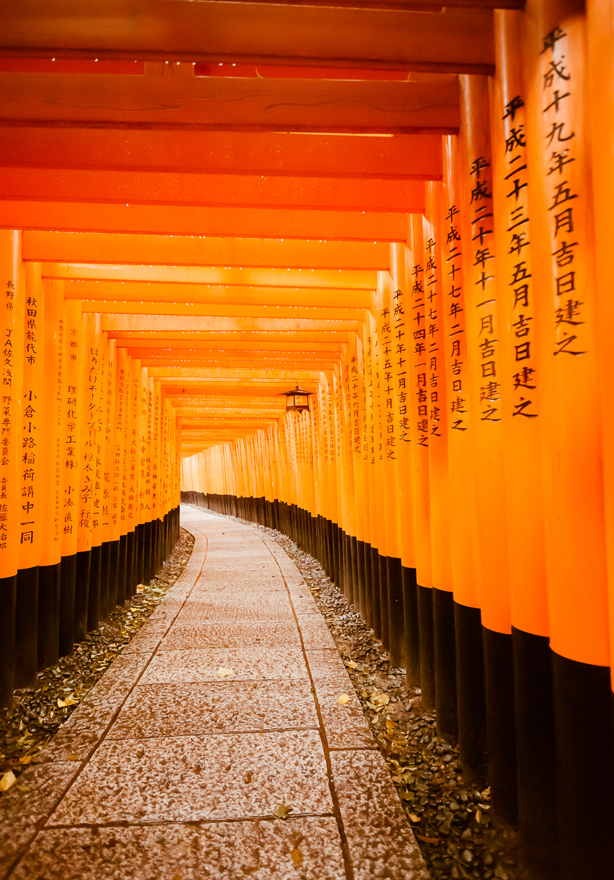 Torii Gates in the Rain at Fushimi Inari