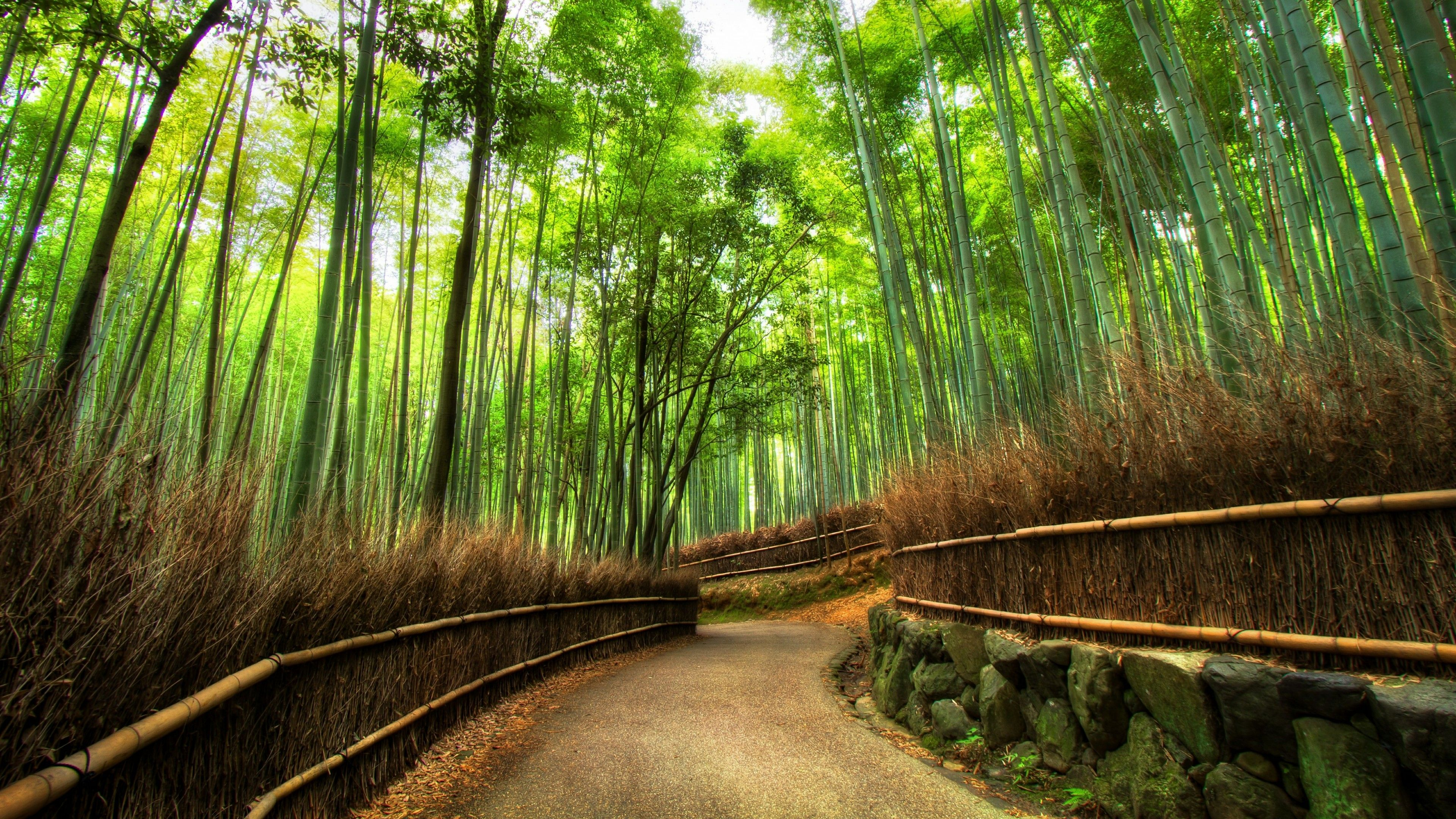 Sagano Bamboo Forest Wallpapers Wallpaper Cave