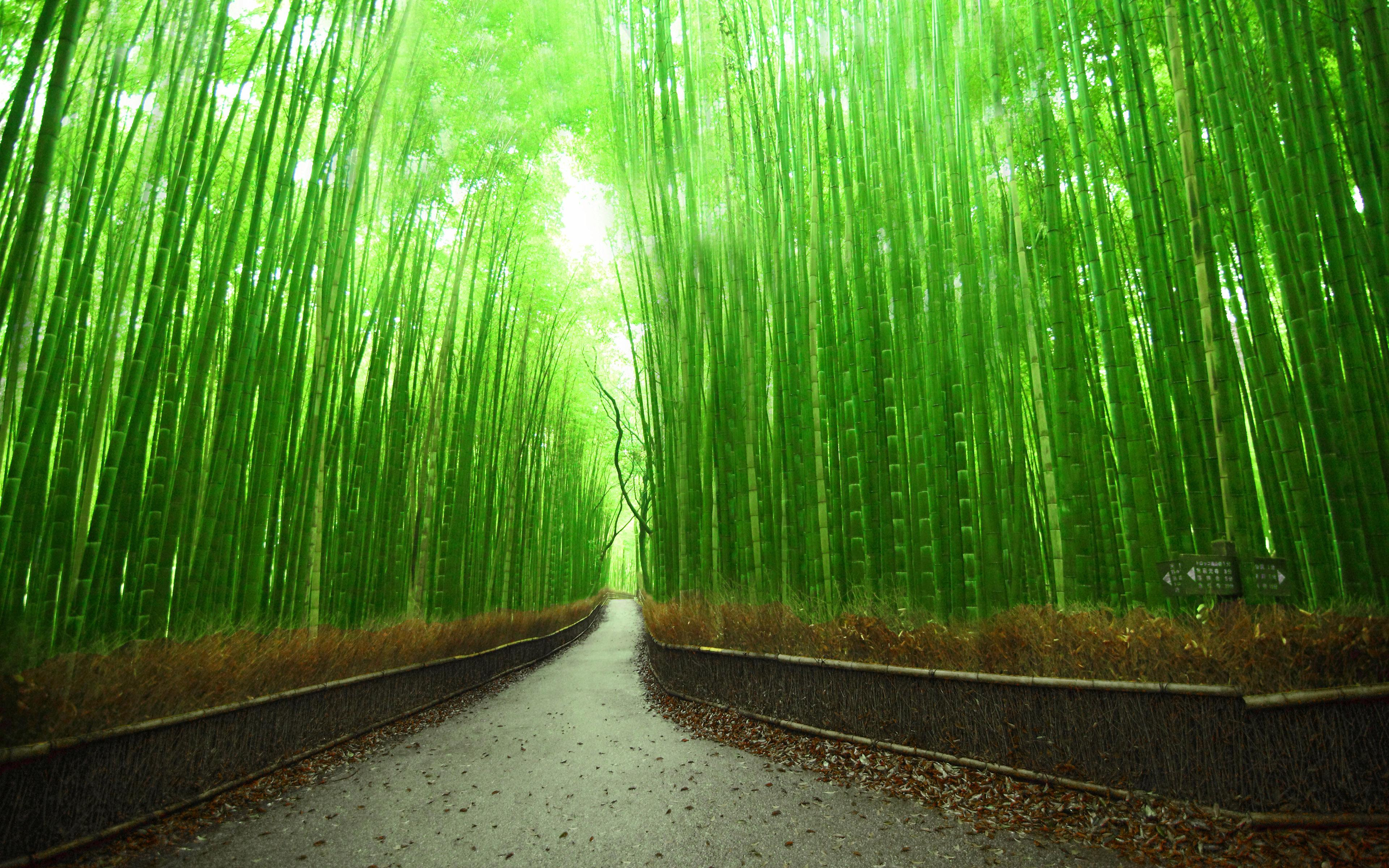 Bamboo Forest Wallpapers for Home