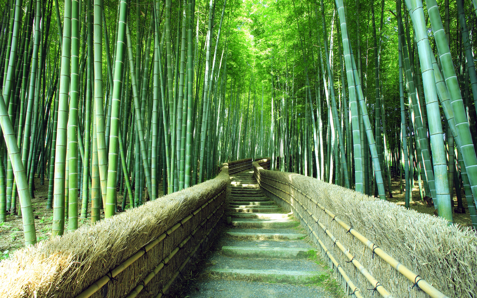 Footpath in Sagano bamboo forest, Kyoto, Japan