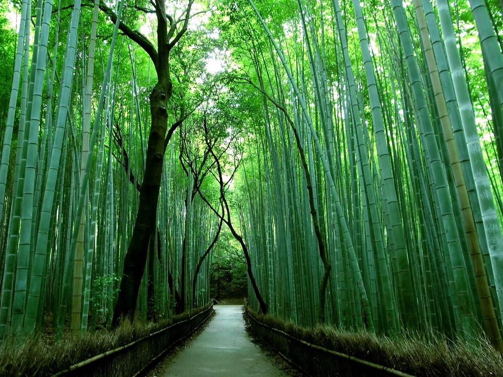 Bamboo Grove Wallpapers
