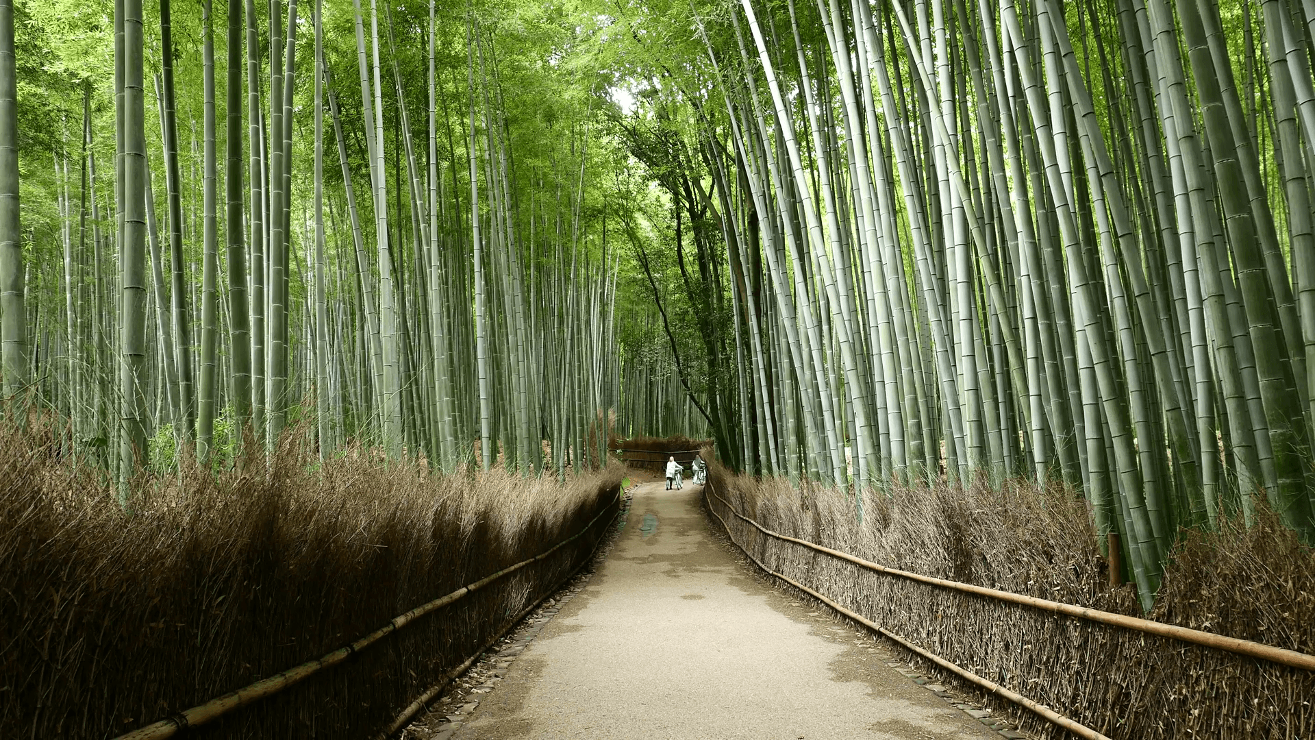 Arashiyama Bamboo Forest in Kyoto Stock Video Footage
