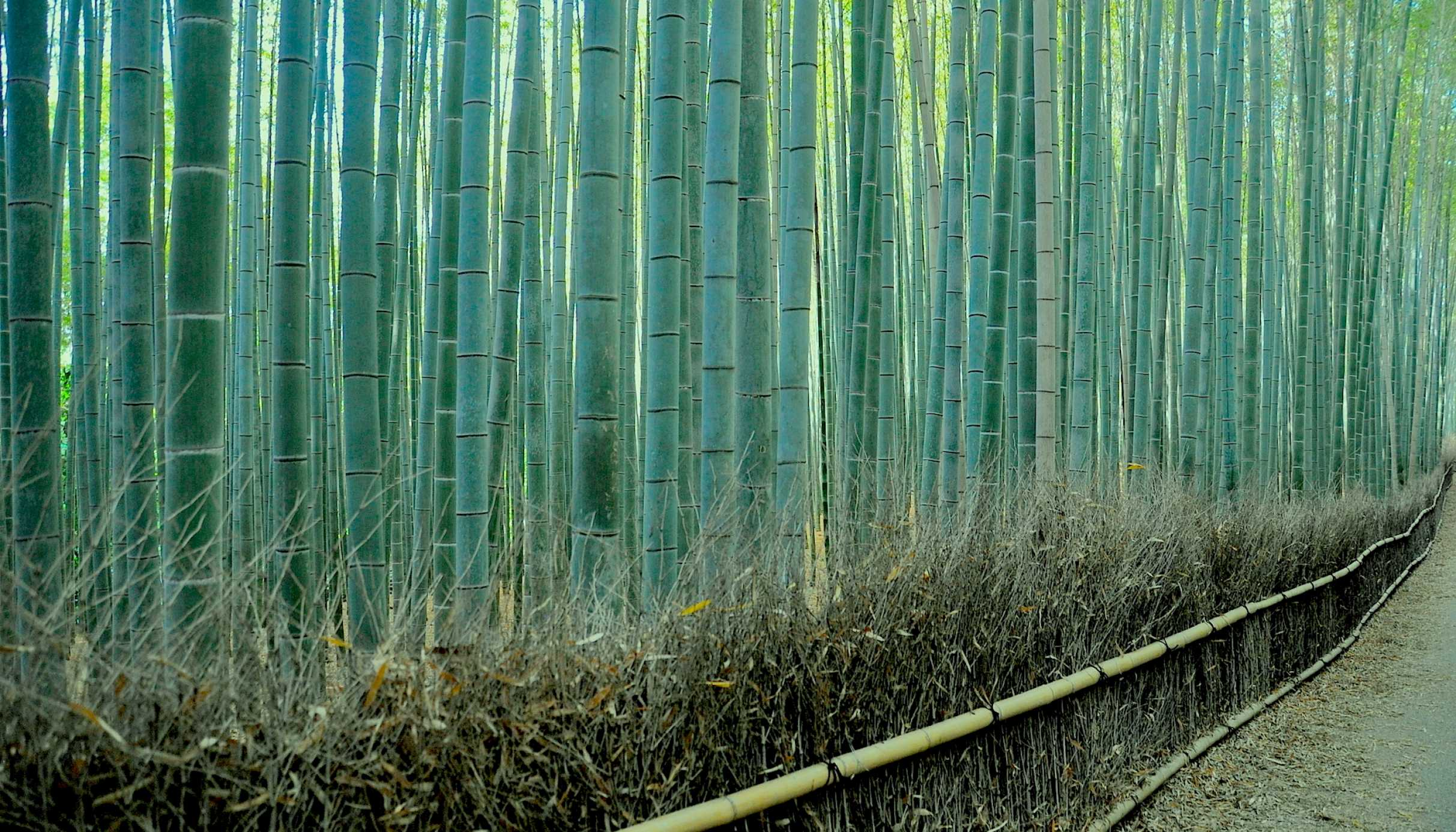 sagano bamboo forest in kyoto one of world's prettiest groves cnn