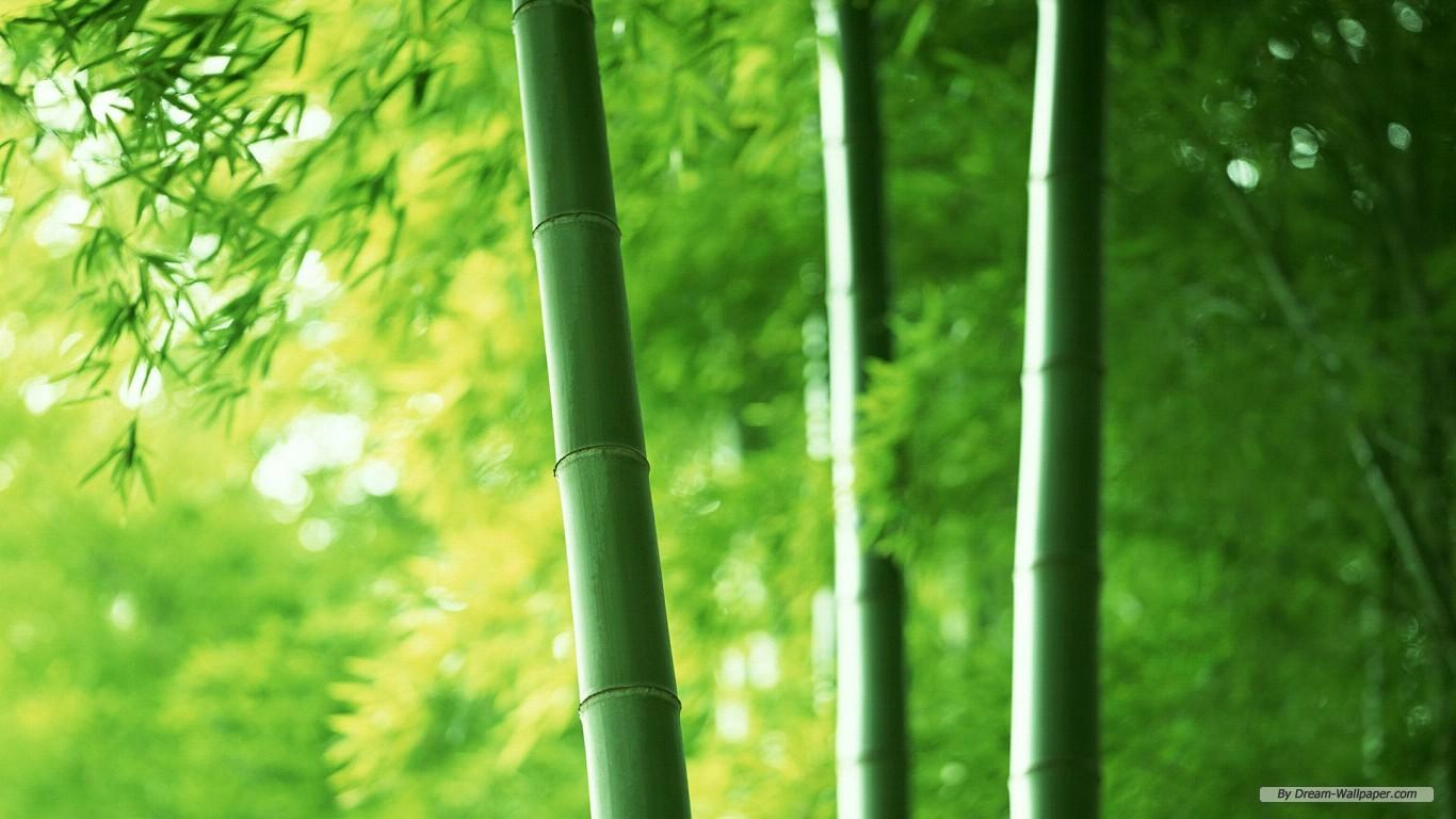 bamboo forest wallpapers Group with 54 items