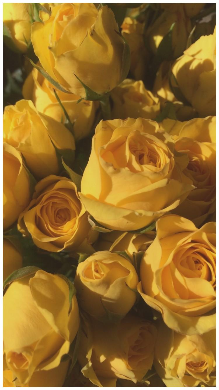 Aesthetic Yellow Flowers Wallpapers – My Blog