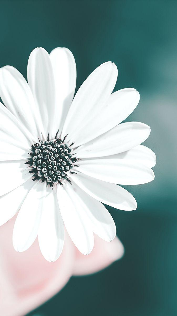 White Flowers Wallpapers - Wallpaper Cave