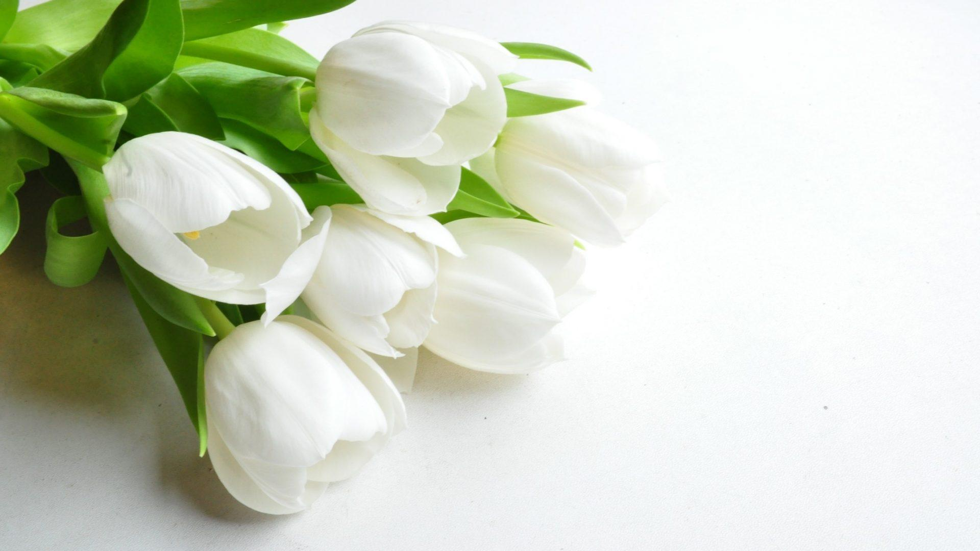 White Flowers Wallpapers Wallpaper Cave