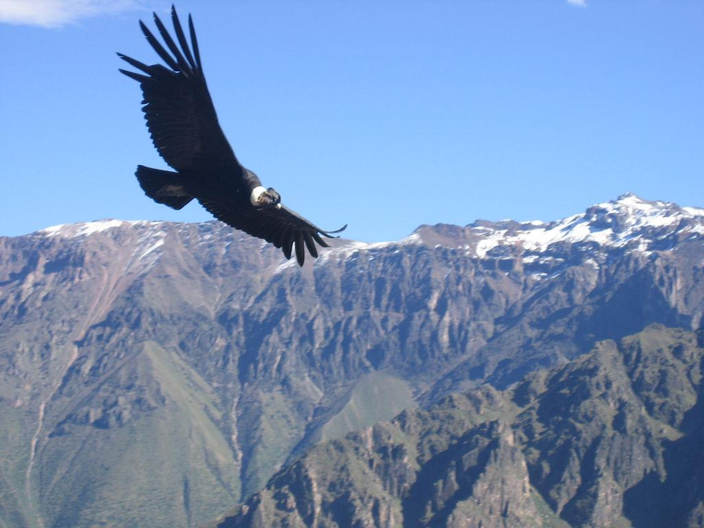 Start Packet Peru 2 or 3 days Colca canyon from Arequipa
