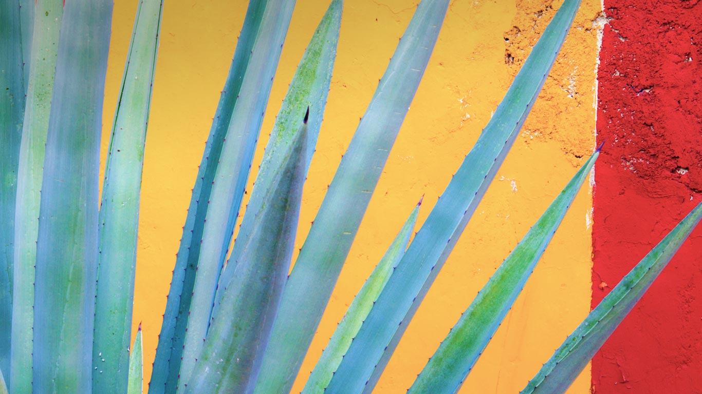 Henequen agave, Yucatán Peninsula, Mexico wallpaper by T1000 ...