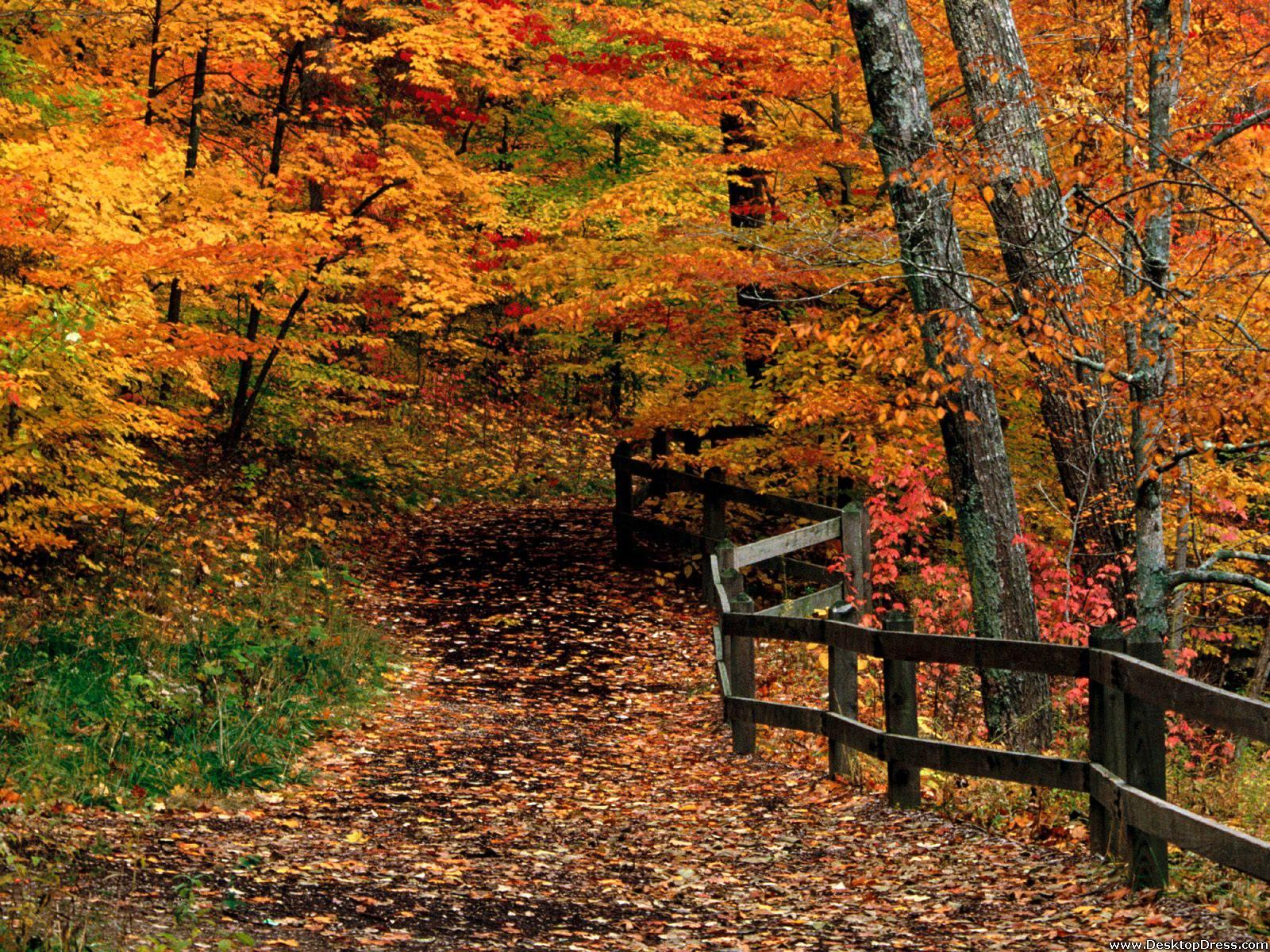 Desktop Wallpapers » Natural Backgrounds » Mccormick Creek State ...
